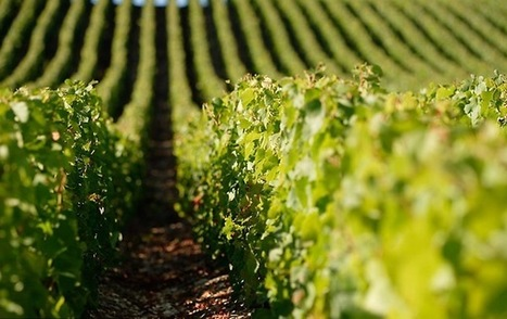 Bilan de la viticulture mondiale en 2015 - Wine Paper | Images et infos du monde viticole | Scoop.it