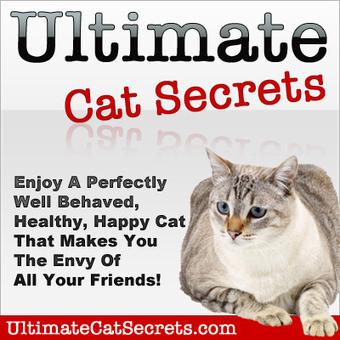 Ultimate Cat Secrets Revealed | cats & dogs! | Scoop.it