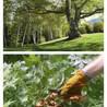 Eager Beaver Tree Service LLC