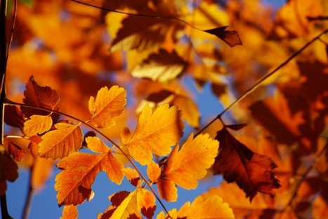 Fabriziol Paterlini nous accompagne durant l'automne   @diffuser.net   Autumn stories   Scoop.it