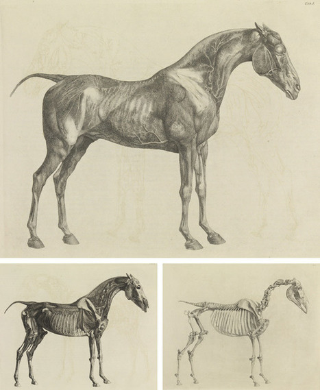 Elegant and Exact: George Stubbs's The Anatomy of the Horse | Hoofcare and Lameness | Scoop.it