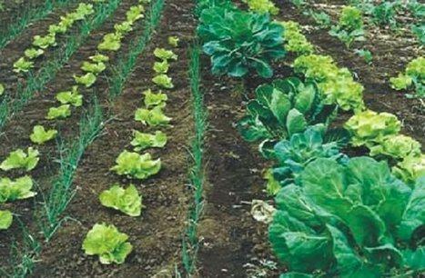 Diferencias entre agroecología y producción orgánica. | Permacultura y autosuficiencia | Scoop.it