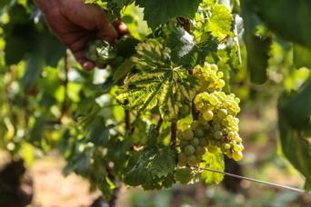 Le Grand Dijon  achète 1,3 million d'euros de terrain | Le vin quotidien | Scoop.it