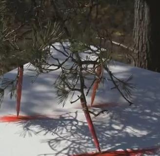 Un proyecto de arte hecho por árboles | TUL | Scoop.it