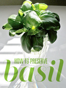How To Preserve Basil | Growing Basil | Gardening Life | Scoop.it