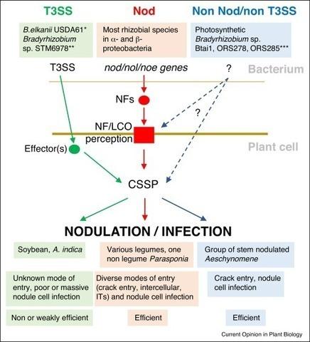 Symbiotic nitrogen fixation by rhizobiat symbiotic nitrogen fixation by rhizobiathe roots of a success story ccuart Choice Image