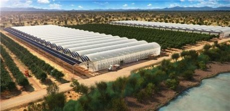 Seawater greenhouses to bring life to the desert | Transición | Scoop.it