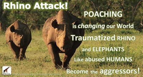 Is poaching changing animal behavior? | Rhino poaching | Scoop.it