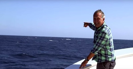 Blue whale interrupts BBC presenter's moan about fruitless whale search | Prozac Moments | Scoop.it