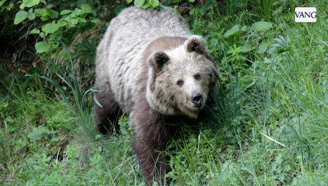 Primera expedición internacional para ver el oso del Pirineo - La Vanguardia (Esp.) - 19 sept. 2012 | Communication & Environnement - GreenTIC & Développement Durable | Scoop.it
