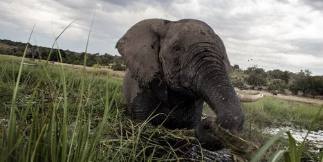 Humans Are Close To Killing Off Two-Thirds Of All Wildlife In Just 50 Years | Upsetment | Scoop.it