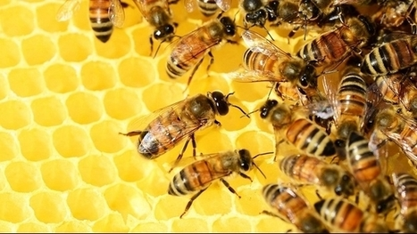 How bees inspire swarm-based artificial intelligence   Latest News & Updates at Daily News & Analysis   Teaching and Learning in HE   Scoop.it