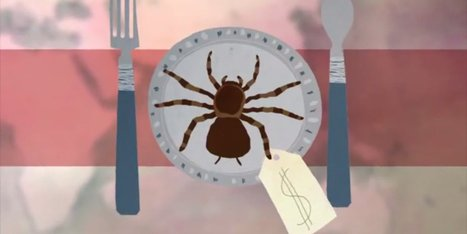 Should We Try Eating Bugs? (VIDEO) - Huffington Post | eating insects = win | Scoop.it