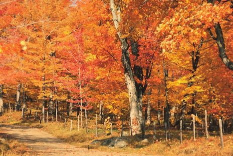 2014 Wisconsin Fall Color Report | The Miracle of Fall | Scoop.it