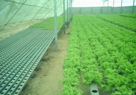 Zips del Conocimiento - Características de la hidroponía | Cultivos Hidropónicos | Scoop.it