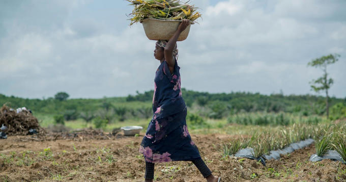 AFRICAN agriculture without African farmers