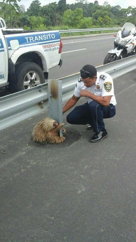 Sloth rescued from a busy highway will fill your weary heart with love | Natural Fears | Scoop.it