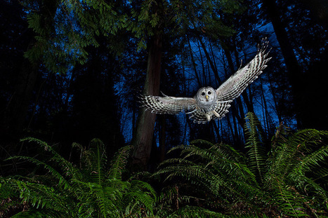Wildlife Photographer of the Year 2013 Winners and Honorable Mentions | Colossal | What Surrounds You | Scoop.it
