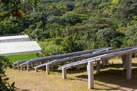 Finca de hidropónicos Mama Delia en Utuado , Puerto Rico   Cultivos Hidropónicos   Scoop.it