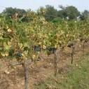 Protection bio cultures maraichage arboriculture viticulture biologiques experimentation GRAB | Chimie verte et agroécologie | Scoop.it
