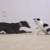 Amigos de las mascotas