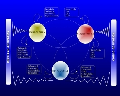 The Heart as a Complex Adaptive System | Complex Insight  - Understanding our world | Scoop.it