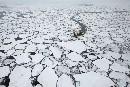 La extensión del hielo Ártico alcanzó su mínimo histórico | Hermético diario | Scoop.it