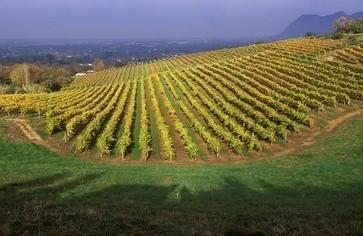 Les exportations record pour le vin de l'Afrique du Sud | Autour du vin | Scoop.it