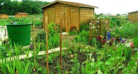 Agriville : un réseau pour une agriculture urbaine et durable | Agriculture urbaine et rooftop | Scoop.it