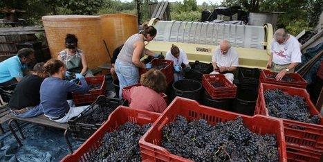 La France redevient le premier producteur mondial de vin | Agriculture en Gironde | Scoop.it