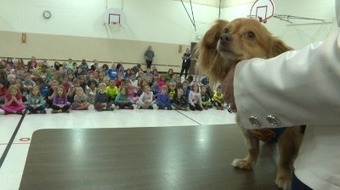 Animals with disabilities teach children about empathy, compassion   Empathy and Animals   Scoop.it
