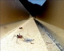 Orientation of ants: every cue counts / Orientation chez les fourmis du désert | EntomoNews | Scoop.it