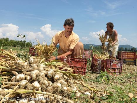 Pesticides : mainmise sur l'environnement | Environnement et développement durable, mode de vie soutenable | Scoop.it