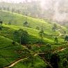 Actu & Voyage au Sri Lanka