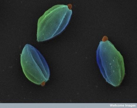 Connaissez vos microbes sur lebout desdoigts! Virus, bactérie, parasite? | EntomoScience | Scoop.it