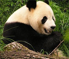 Facts About Endangered Animals | Top 11 Facts | Conservation of wildlife | Scoop.it