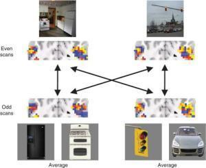 Neuroimaging reveals how brain uses objects to recognize scenes | Cognitive Science | Scoop.it