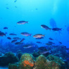 Can the world's oceans sustain our increasing appetite for fish?