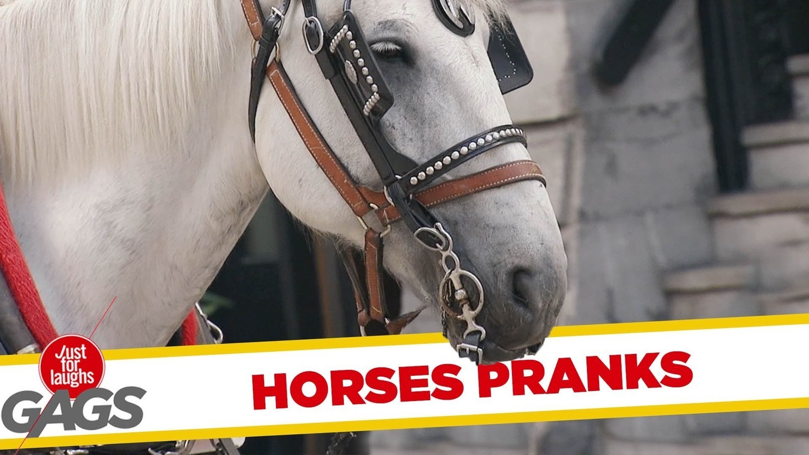 Best Horse Pranks Just For Laugh Dailymotion Vi