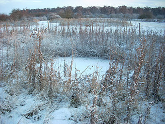 Icy Pond Advice | AJC's Frogroom | Scoop.it