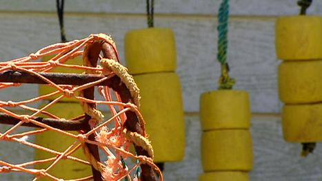 Portuguese Lady nets DFO $101K in fishing fines - Nova Scotia - CBC News | Nova Scotia Fishing | Scoop.it