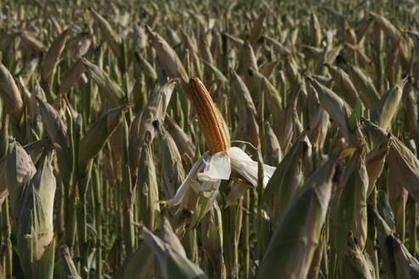 OGM : bras de fer entre les agriculteurs et NKM - Le Figaro | Moove it !  On se bouge ! | Scoop.it