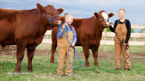 Nature's vaccines: children who live on dairy farms have almost zero allergies. Ever wonder why? | Beat Allergic Rhinitis and Allergies Naturally | Scoop.it