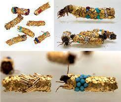 Leonardo On-Line: The Wonderful Cadis Worm   morphogenesis and emergence   Scoop.it