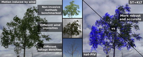 A robust videogrametric method for the velocimetry of wind-induced motion in trees | plant cell genetics | Scoop.it