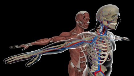 HoloAnatomy beats Google's Tilt brush and David Attenborough to major science award - MSPoweruser | Virtual Patients, VR, Online Sims and Serious Games for Education and Care | Scoop.it