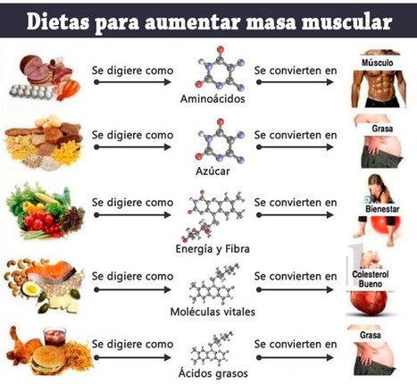 Aumentar masa muscular dieta y ejercicios