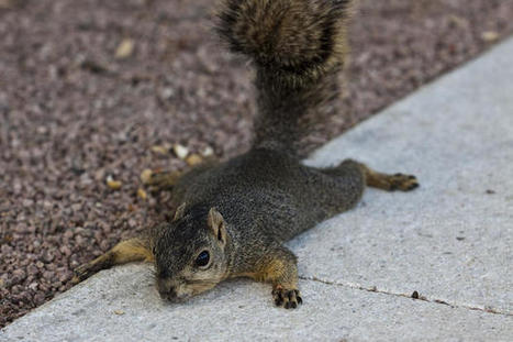 Squirrels: 1, Rest of the world: 0 | Pet Sitter Picks | Scoop.it