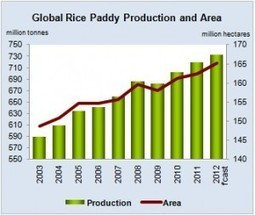 FAO expects rice production to rise by 1.7% in 2012 | Thailand Business News | Scoop.it