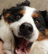 Honden verwerken woorden net als mensen | Geheugen technieken - Techniques de mémorisation | Scoop.it